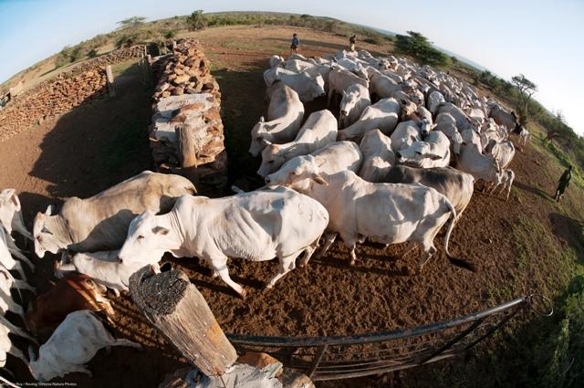 Cattle-Ranching-Laikipia